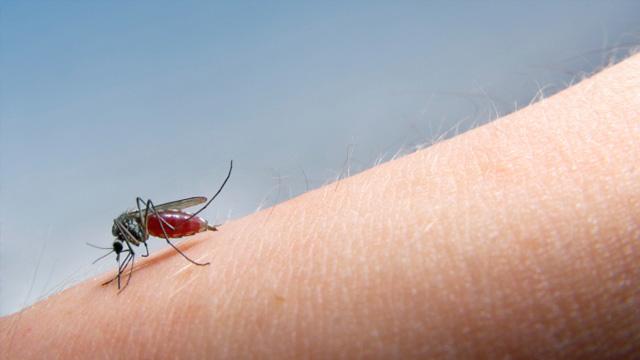 Kleine Biester – Tipps gegen Stechmücken