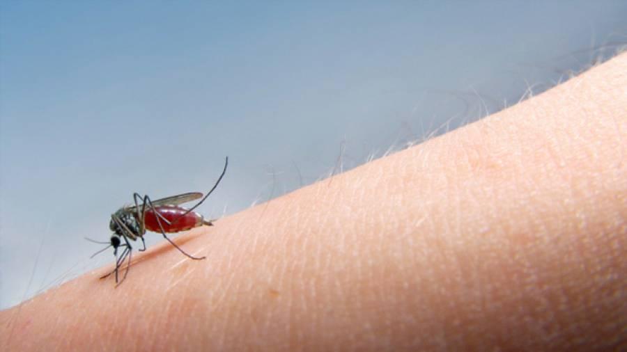 Kleine Biester – Tipps gegen Stechmücken - netzathleten.de