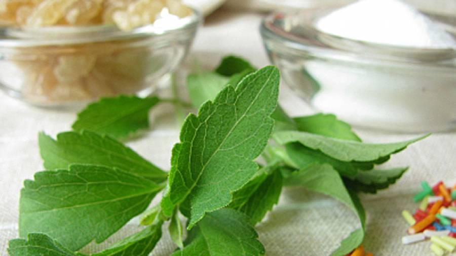 pflanzlicher s stoff wie gesund ist stevia. Black Bedroom Furniture Sets. Home Design Ideas