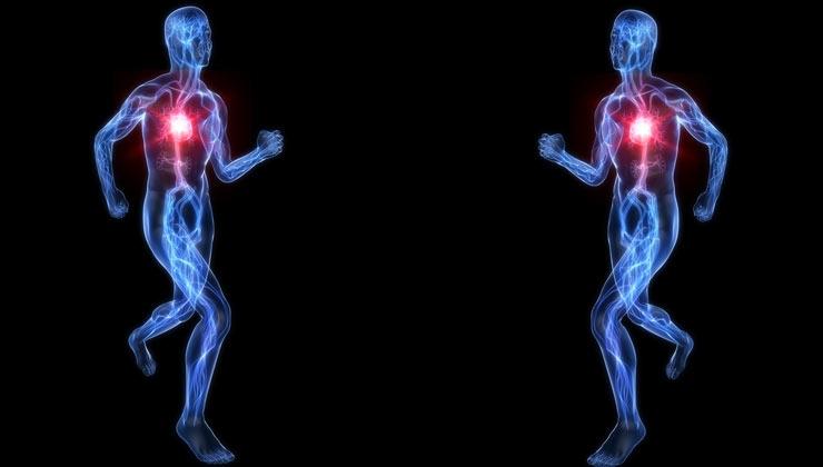 Herz: krankhafte Vergrößerung durch Ausdauersport?