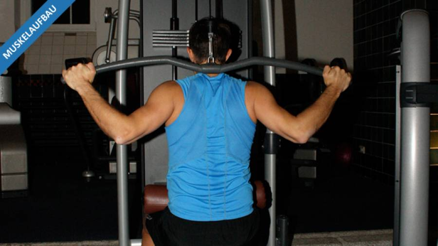Maximalkraft – Muskelaufbauprogramm Teil 4
