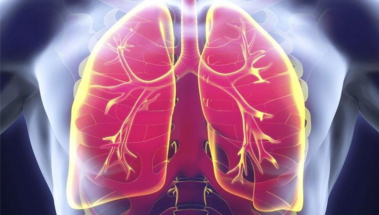 Wie funktioniert unsere Atmung? Ein Kurzüberblick