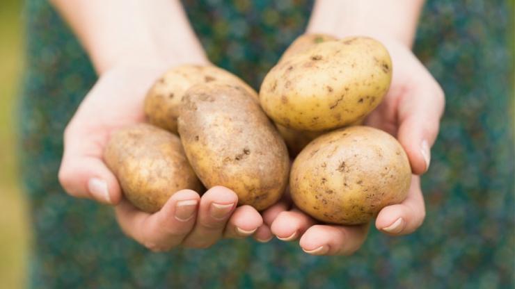 Carboloading mit Kartoffeln