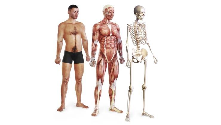 Was ist Biokinematik?