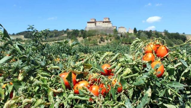 Tomaten als Baustein für die Gesundheit