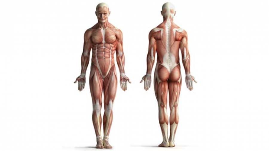 Flexibel ohne den Muskel zu dehnen – so geht's