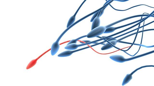 Besteht Sperma aus Eiweiß?