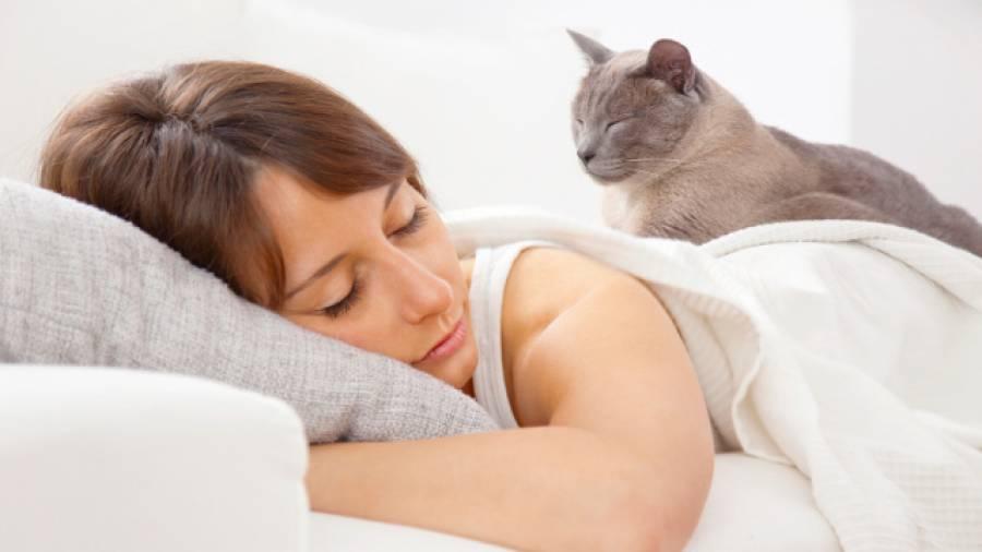 Heilendes Schnurren – Katzen helfen bei Knochenbrüchen