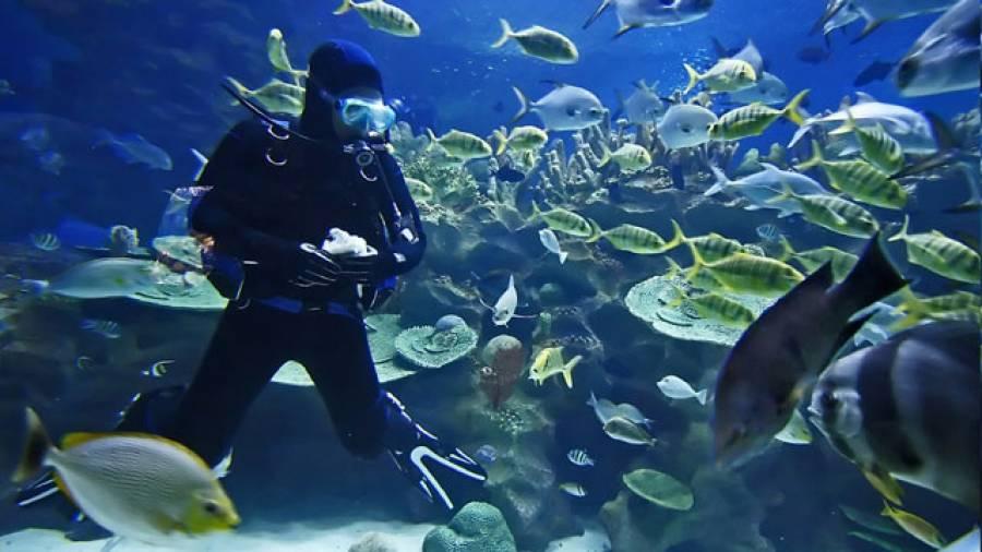 Unterwasserwelt live: Tauchen auf Fuerteventura